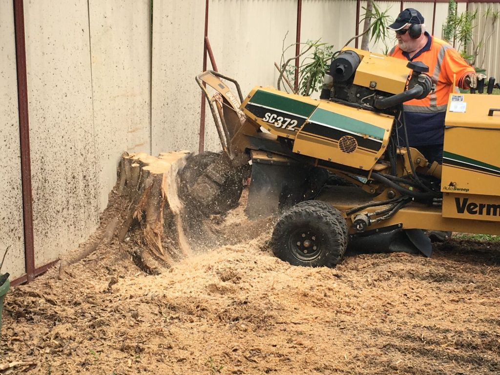 removing a tree stump in gold coast