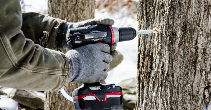 how to drill into a tree without hurting it
